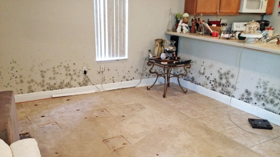 Mold in the Home Chances are that you've heard a lot about mold removal services lately, and you may be wondering if you need them. We can tell you definitively - maybe. Turns out, there is a lot of misinformation out there when it comes to mold rem